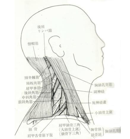頭痛解消!首のストレッチの方法
